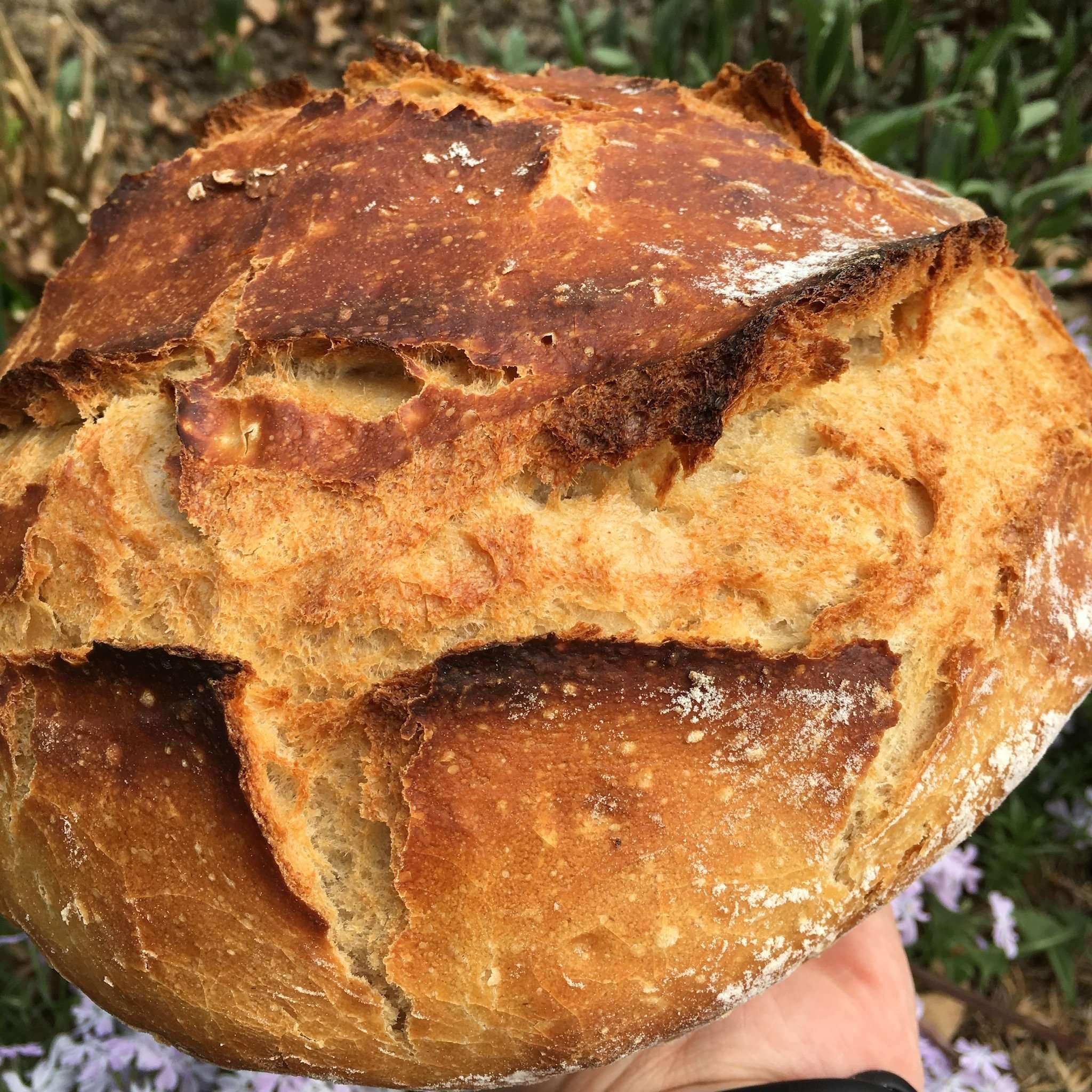 Friss mich Dumm Brot